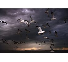 Seagull Storm Photographic Print