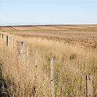 Resting paddocks by Leanne Nelson