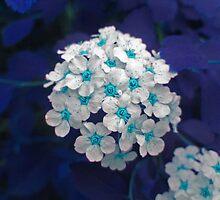 Blue Bouquet by Linda Miller Gesualdo