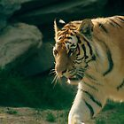 Tiger Cat by RockyWalley