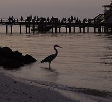 Bird At The Pier by David Lee Thompson