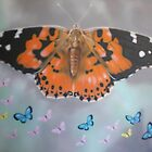 butterflies by Dale Keogh
