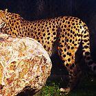 Cheetah by Melanie Roberts