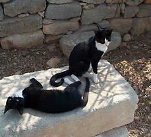 The Very Friendly Kitties of  Aptera, Crete Island, Greece by Katerina Williams-Mourouna