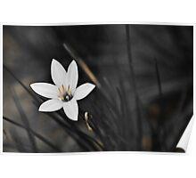 White on black flower Poster