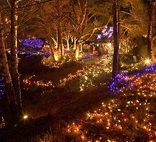 festival of lights , VanDusen botanical garden , Vancouver , Canada by Christopher Barton