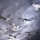 Sea Of Gulls by Gene Praag