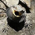 Bearded Dragon by David Cash