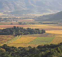 autumn 2, Napa Valley , California by Christopher Barton