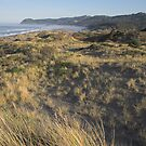 windblown tussock grass, Oregon Coast by Christopher Barton
