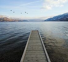 ducks and pier, Okanagan Lake, British Columbia by Christopher Barton