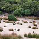 Wallaby habitat by Alex Howen