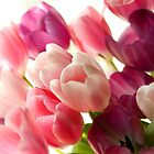 Tulips_2 by ChiaraLily