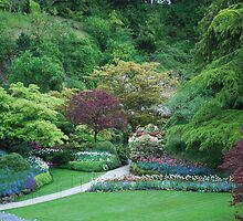 Viewpoint into Butchart Gardens - Sunken Garden by Carol Clifford