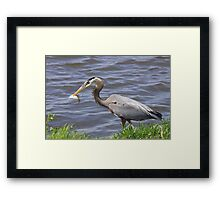Spear fishing... Framed Print