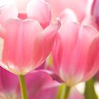 Tulips_9 by ChiaraLily