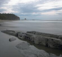 Cribs Creek , West Coast Trail , Vancouver Island by Christopher Barton