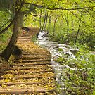 autumn leaves on steps , Plitvice Lakes, Croatia  by Christopher Barton