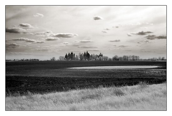 Farmland - Oswego, IL USA  by Rene Hales