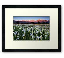 Eastern Sierra Wild Iris Sunrise Framed Print