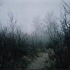 Brightwater Morning Fog by Elizabeth McMullen