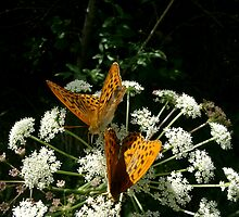 Orange Butterfly by solena432