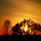 SunSet by terrebo