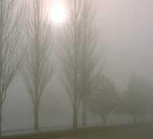 Winter Poplars in Fog 4 by SteveOhlsen