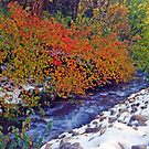 Autumn Stream 5 - Millcreek Canyon, Utah, USA by SteveOhlsen