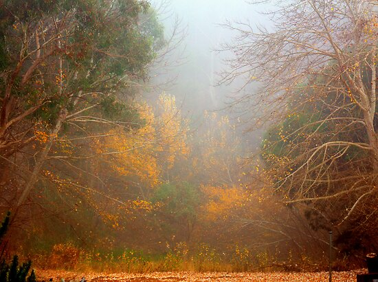 Autumn Mist by Elaine Teague