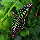 Butterfly in green by ienemien
