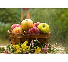 Apples in the Rain Photographic Print