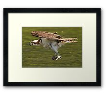 River Rogue Framed Print