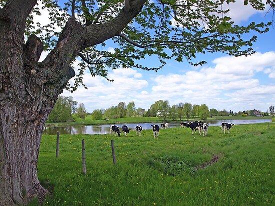 Classic Country Scene by marchello