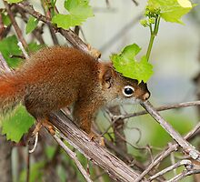 Red Baby Squirrel by Renee Dawson
