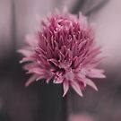 Chive Flower by Lordy99