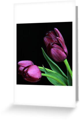 Dark Purple Tulips by RA-Photography