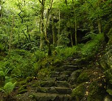 stone steps path through the woods by Joyce Knorz