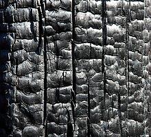 black texture charcoal by Tamara Cornell