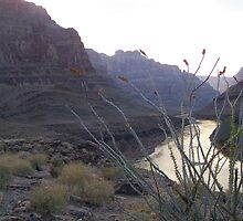 Grand Canyon 10 by Tundracat
