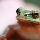 Pacific Tree Frog by Coreycw