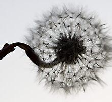 Wish Flower by Coreycw