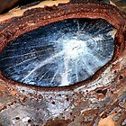 A Galaxy In A Knothole by Bob Wall