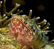 Lizardfish by Marcel Botman