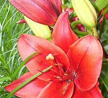 Red Lily by elajanus