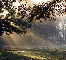 Autumn Sunray's by WendyJC