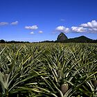 Pineapples Under Tibrogagan by David Cash