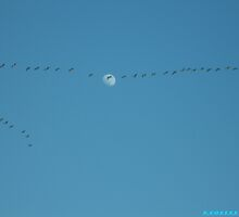 The Moon And The Geese by Bea Godbee