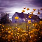 Buttercup Farm by humanremains