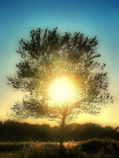 Sun Tree by Jo Nijenhuis
